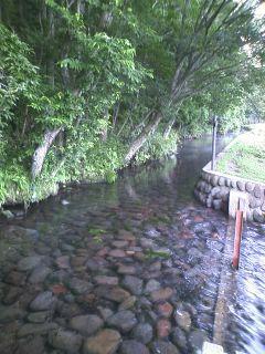湧水の木陰路