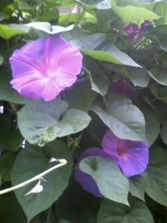 竹田で見かけた花々