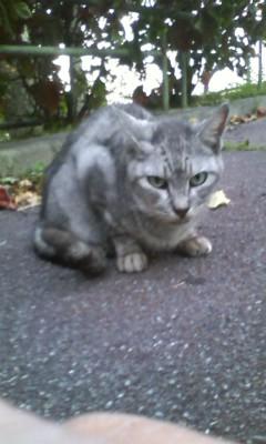 希望ヶ丘公園の野良猫くん達